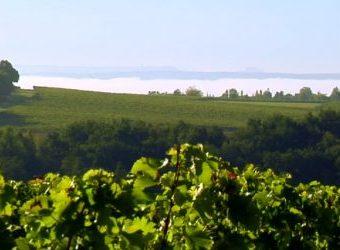 Puy Servain en image : une vidéo qui retrace l'alchimie d'un grand vin