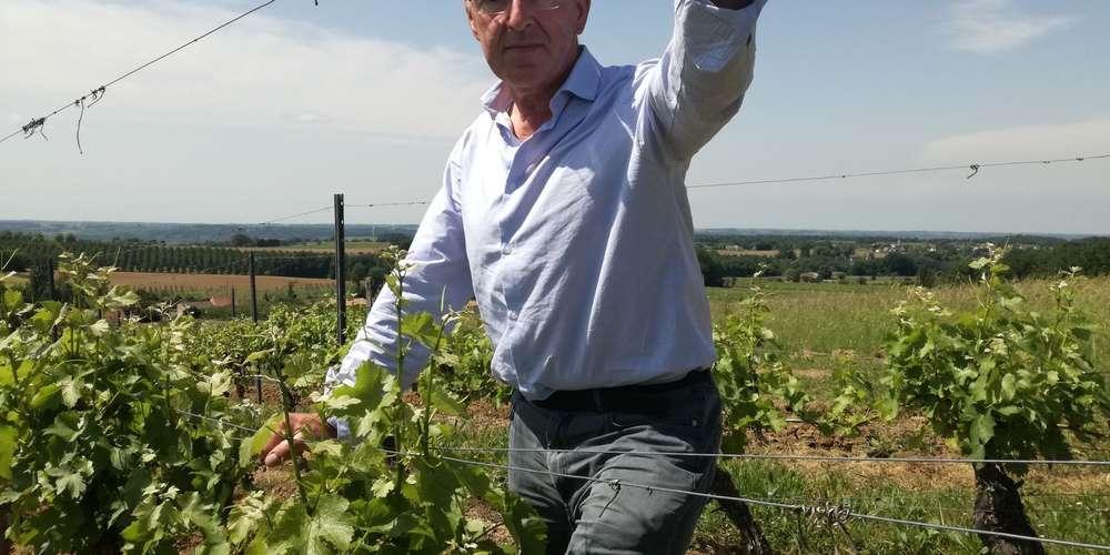 Le vignoble qui vit à l'ombre du saint-Emilion